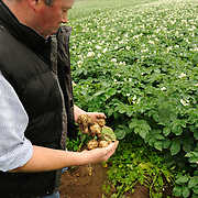 Farmer Enda Doran checks the potato production planted in one of his farming land in Ballinasloe, Co. Galway...Mr. Doran is the eldest of 3 brothers and sisters and by tradition the heritor of the family farming land and business. His farming activities involve cereal and potato production, cattle and sheep breathing and contract work for other farmers.