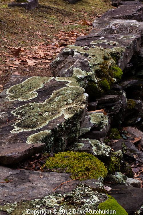 Cemeterey wall, Dummerston,VT., with oak,leaves, green moss on field stone