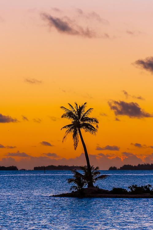 A single palm tree on a small motu (island), Bora Bora, Society Islands, French Polynesia.