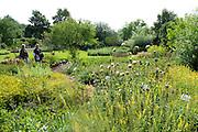 Kräutergarten im Aukammtal, Wiesbaden, Hessen, Deutschland | herb garden, Aukamm valley, Wiesbaden, Hesse, Germany