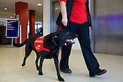 Assistance Dogs UK shoot around Banbury