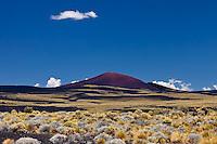 VOLCAN MORADO, ESTEPA  CON COIRONES (Festuca gracillima - fam. poaceas) Y SUELO NEGRO DE PIEDRAS VOLCANICAS, RESERVA PROVINCIAL LA PAYUNIA (PAYUN, PAYEN), MALARGUE, PROVINCIA DE MENDOZA, ARGENTINA (PHOTO © MARCO GUOLI - ALL RIGHTS RESERVED)