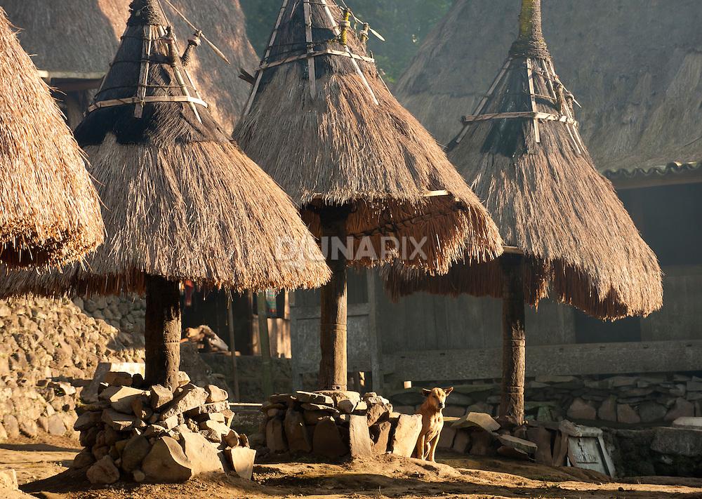 Luba Village, central Flores, East Nusa Tenggara, Indonesia