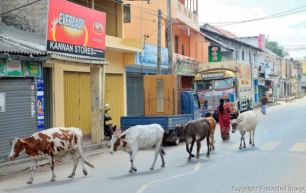 Jaffna, Sri Lanka.