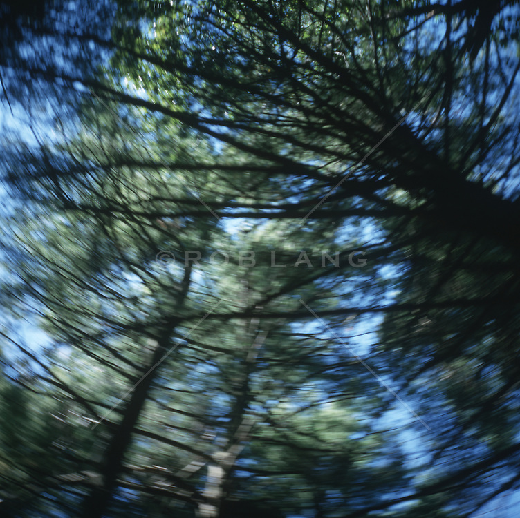 pine trees  in blurry motion