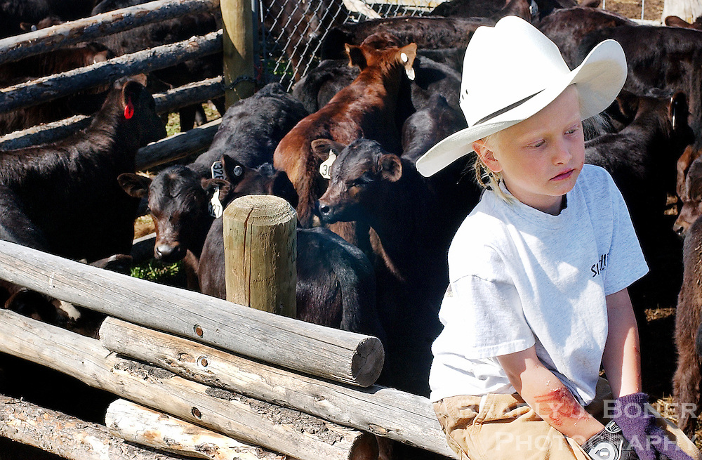 NEWS&GUIDE PHOTO / BRADLY J. BONER.McKenzie Hollingsworth, 7, watches the branding from a distance near the coral holding the calves.  Hollingsworth was helping to load the calves into the branding chute.