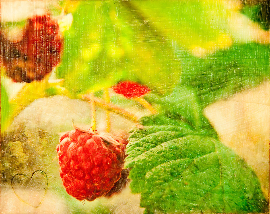 "Raspberry Vine Photo-Encaustic Art 8x10"" SOLD"