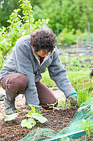 lady planting vegetables in her allotment