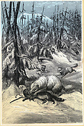 Fur Animals of the Arcitc:  Arctic Fox attacking trapped Sable while, in the background, the trapper rushes to scare off the foxes in the hope of saving a valuable pelt. Chromoxylograph. from G Hartwig 'The Polar World', London, 1874