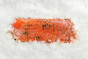 Fresh Salmon on ice