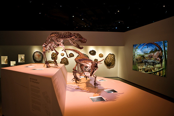 Stock photo of a Postosuchus attacking a Desmatosuchus at the new Paleontology Hall at the Houston Museum of Natural Science