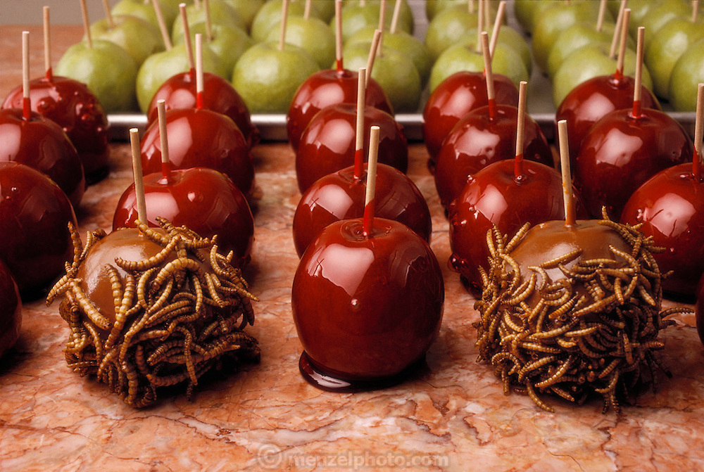 Mealworm covered caramel apples is one of the many insect-based novelty sweets made by the Hotlix Candy Company, Pismo Beach, California. Image from the book project Man Eating Bugs: The Art and Science of Eating Insects.
