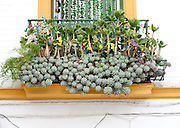 Unusual window box display of cacti in Barrio Macarena, Seville, Spain
