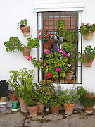 Geranium pots and flowers outside a house in the Andalusian village of Grazalema, Cadiz province, Spain