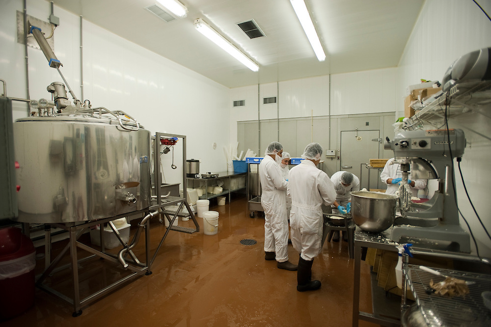 workers making cheese at dairy