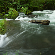 A fallen log helps generate a whirlpool as the fast moving Oriase-gawa river moves downstream from Lake Towada.