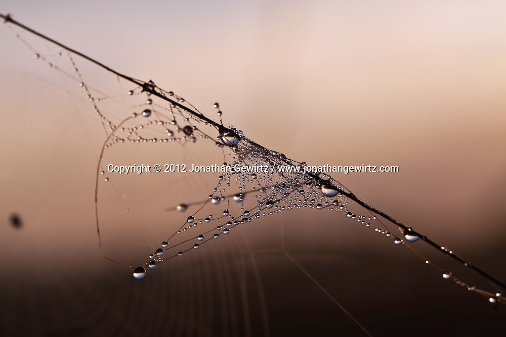 A dew-covered fragment of spider web in the Florida Everglades. WATERMARKS WILL NOT APPEAR ON PRINTS OR LICENSED IMAGES.