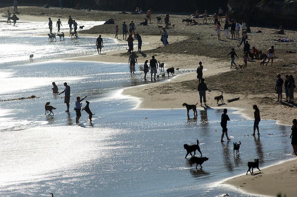 Dog Beach, Lighthouse Field State Park, Santa Cruz, California, United States of America
