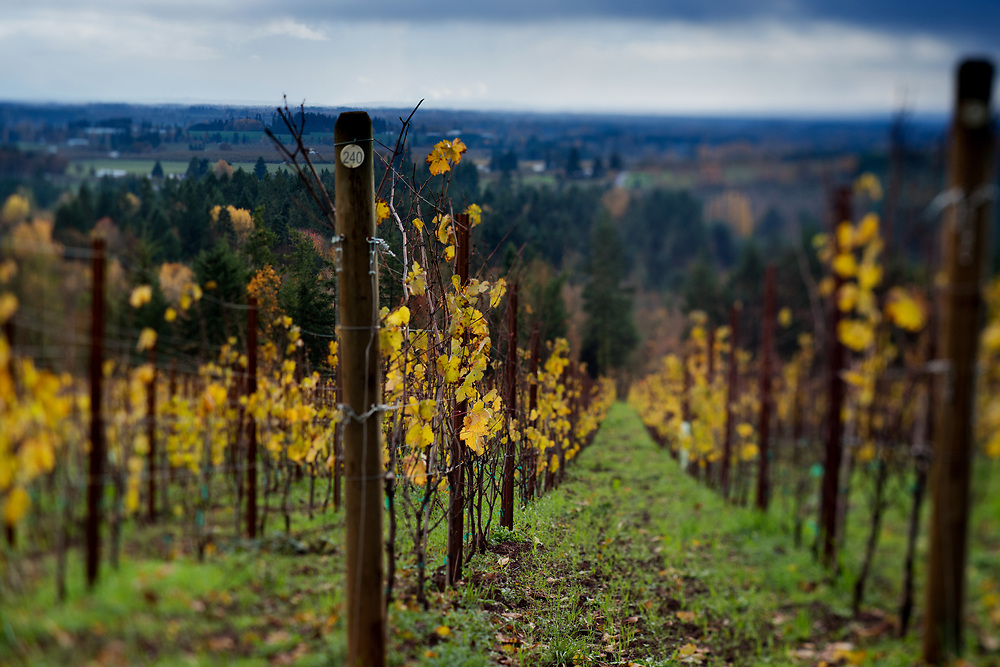 Fall in the Willamette Valley, Dundee Hills AVA