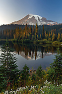 Young fir trees and wildflowers (Pearly Everlasting) along the edge of Reflection Lakes in Mount Rainier National Park.  Forest fire smoke made for unusual sunset light on Mount Rainier.