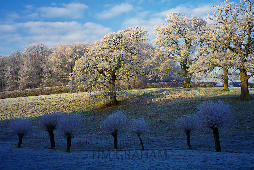 Frost at Swinbrook in the Cotswolds,  Oxfordshire, England, UK.