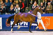 In Between kampioen springhengsten<br /> KWPN Hengstenkeuring 2016<br /> © DigiShots