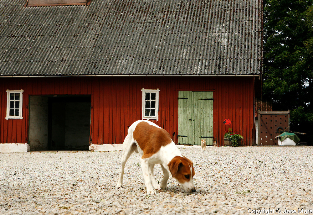 A woking farm near Malmo, Sweden.<br /> Photography by Jose More