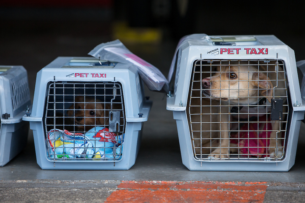 GABE GREEN/Press<br /> <br /> Dogs taken from a shelter in California wait to be transported to the Kootenai Humane Society from the Coeur d&rsquo;Alene Airport Saturday.