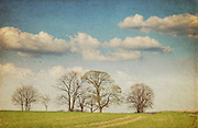 Row of sprouting trees on a spring day<br />