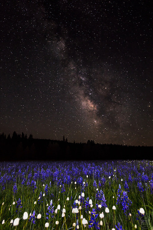 """Milky Way Above Sagehen Meadows 2"" - Photograph of the Milky Way and other stars above a field of Camas wildflowers at Sagehen Meadows, near Truckee, California."