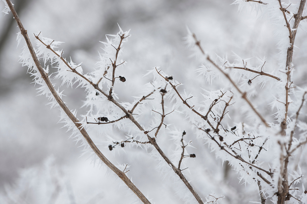 Rime frost buildup on brush