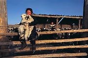 Darkhad girl with lambs<br /> near Renchihlhumbe Town<br /> Darkhadyn Khotgor Depression<br /> Northern Mongolia