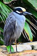 Birds-General