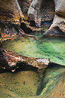 Emerald pools in the Subway canyon formation Left Fork of North Creek, Zion National Park Utah USA