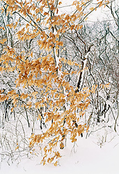 Trees on snow-covered landscape