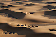 A caravan with camels and some people is walking through a sand desert. Merzouga. Morocco. Africa.