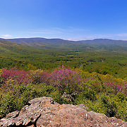 """""""Colorful Blue Ridge Spring""""<br /> <br /> Enjoy the vast beauty of the Blue Ridge Mountains and spring blossoms!!<br /> <br /> The Blue Ridge Mountains by Rachel Cohen"""