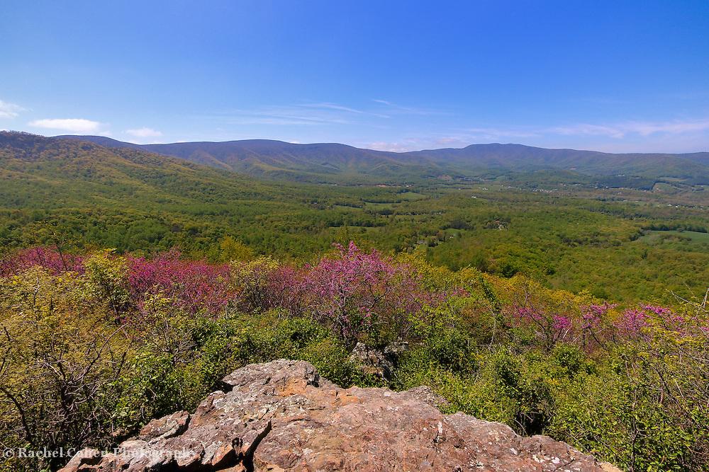 &quot;Colorful Blue Ridge Spring&quot;<br /> <br /> Enjoy the vast beauty of the Blue Ridge Mountains and spring blossoms!!<br /> <br /> The Blue Ridge Mountains by Rachel Cohen