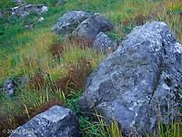 boulders and autumn grasses-Chinook Pass, Mount Rainier National Park, Washington, USA