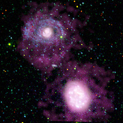 two companion galaxies, NGC 4625 (top) and NGC 4618 (bottom), and their surrounding cocoons of cool hydrogen gas (purple). The huge set of spiral arms on NGC 4625 (blue) was discovered by the ultraviolet eyes of NASA's Galaxy Evolution Explorer. Though these arms are nearly invisible when viewed in optical light, they glow brightly in ultraviolet. This is because they are bustling with hot, new-born stars that radiate primarily ultraviolet light. The vibrant spiral arms are also quite lengthy, stretching out to a distance four times the size of the galaxy's core. They are part of the largest ultraviolet galactic disk discovered so far. The purple nebulosity shown here illustrates that hydrogen gas an ingredient of star formation is diffusely distributed around both galaxies. This means that other unknown factors led to the development of the arms of NGC 4625.