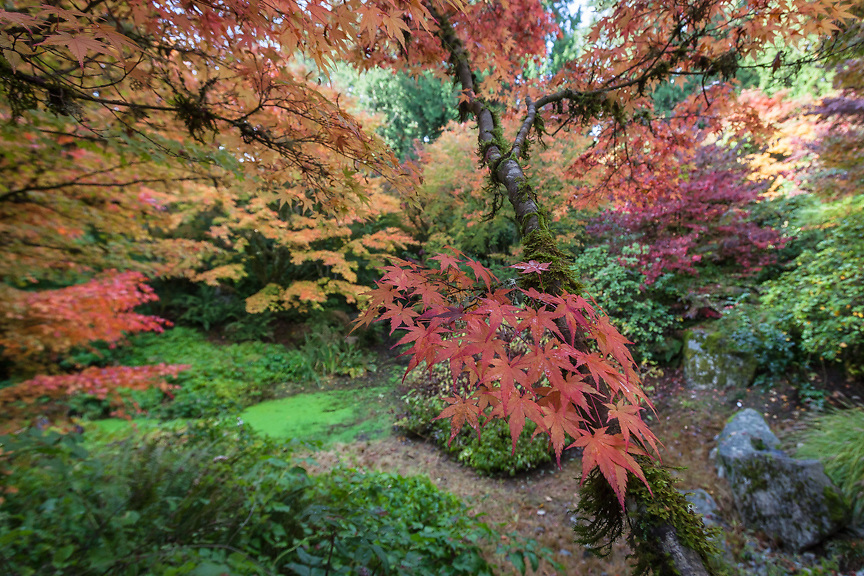 Oct 2016 Bellevue Botanical Garden