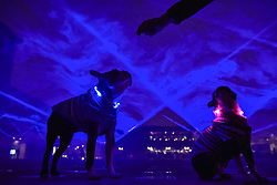 "© Licensed to London News Pictures. 17/01/2018. LONDON, UK. Owner Leon Harwood feeds (L to R) Henry and Bess, a pair of Boston terriers amidst ""Waterlicht"" by Daan Roosegaarde in Granary Square, Kings Cross.  Preview of Lumiere London, the capital's largest arts festival commissioned by The Mayor of London and produced by Artichoke.  Light installations by leading artists have been set up, both north and south of the river for the public to view 18-21 January.   Photo credit: Stephen Chung/LNP"