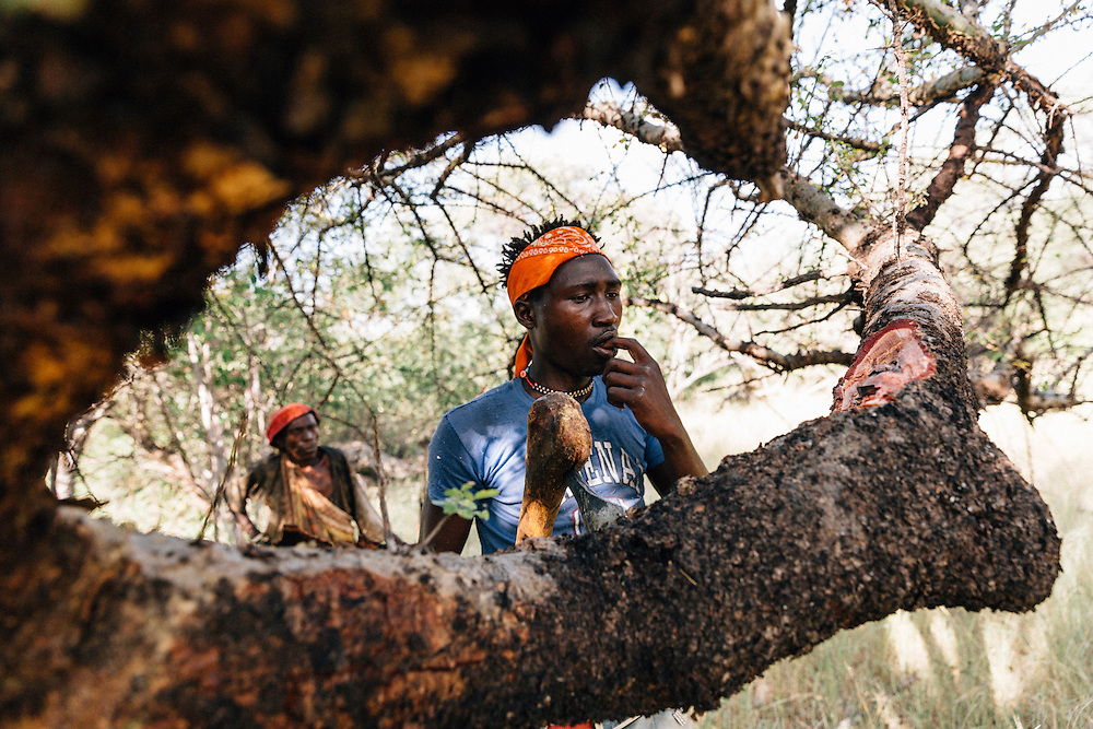 Benja, 20, a male member of the Hadza tribe forages honey. Yaeda Valley, Northern Tanzania. Photo by Greg Funnell, March 2016.