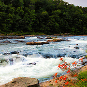 """White Water and Lilies""<br />