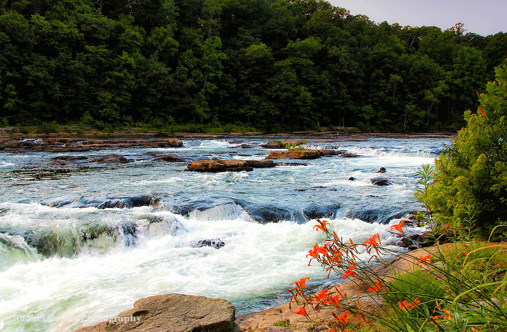 &quot;White Water and Lilies&quot;<br /> <br /> Sit upon the rocks by the Youghiogheny River in Ohiopyle. Strong waters rush over the rocks, beautiful forests line the river, and lovely Day lilies bend towards the water!!<br /> <br /> Laurel Highlands Area of Pennsylvania by Rachel Cohen