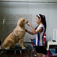 CHINA: Spoiled pets