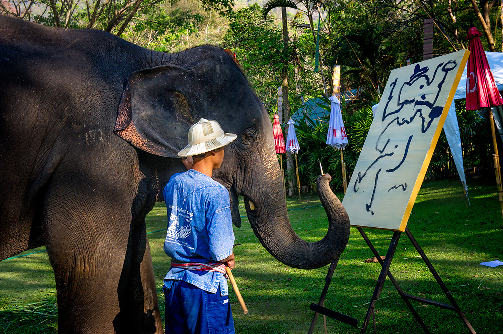 Mahout practising painting with an elephant at Mae Sa (Maesa) Elephant Camp in Chiang Mai, Thailand
