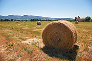 Rural Italy, Umbria bales of straw in the field