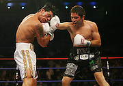 Alfonso Gomez (Black Trunks) hits Arturo Gatti (White Trunks) with a right to the head during action in there schedule 10 Round Welterweight bout on Saturday Night July 14, 2007  Atlantic City Boardwalk Hall in Atlantic City, New Jersey. Gomez went onto to score a 7th round Knock Out over the former Welterweight Champion.
