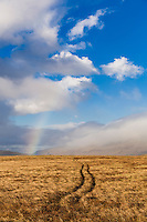 Tracks in the grass. Rainbow in the back